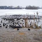 vogels%2520in%2520de%2520winter%2520007.jpg