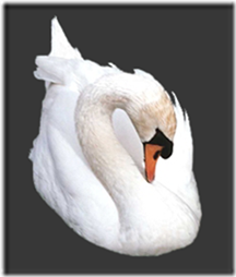 cisnes-buscoimagenes-15_thumb