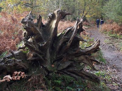 Tree root art