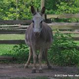 05-11-12 Wildlife Prairie State Park IL - IMGP1621.JPG