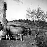 1956-amede-et-claudius.jpg