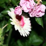 Gardening 2012 - IMG_3083.JPG