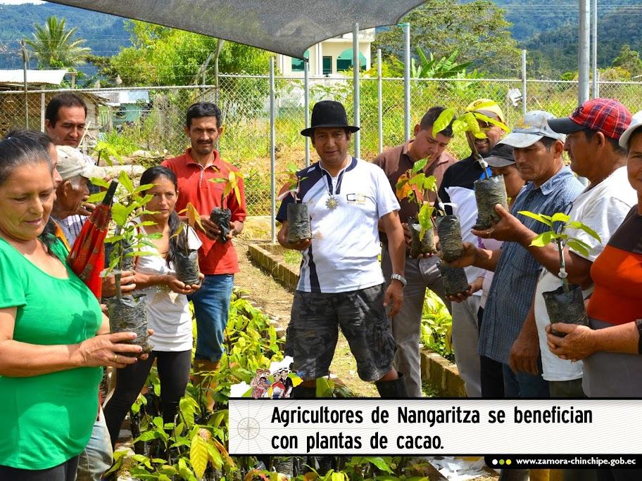 AGRICULTORES DE NANGARITZA SE BENEFICIAN CON PLANTAS DE CACAO