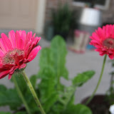 Gardening 2012 - IMG_2767.JPG