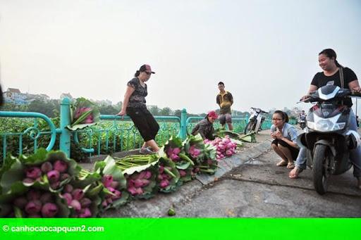 Hình 3: Hà Nội rực rỡ mùa hoa sen