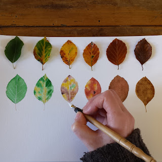 www.AliceDrawsTheLine.co.uk :: drawing Autumn Leaves