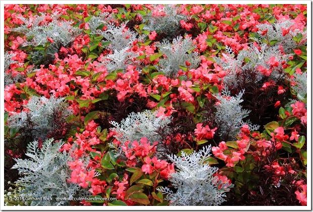 160906_Butchart_Gardens_0159