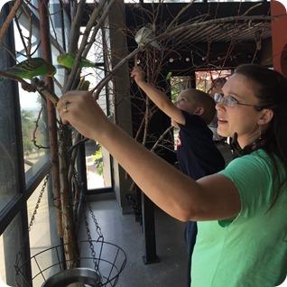 Budgie Buddies Seed Stick Birds at Cheyenne Mountain Zoo