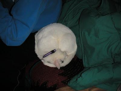 Little ball of cat