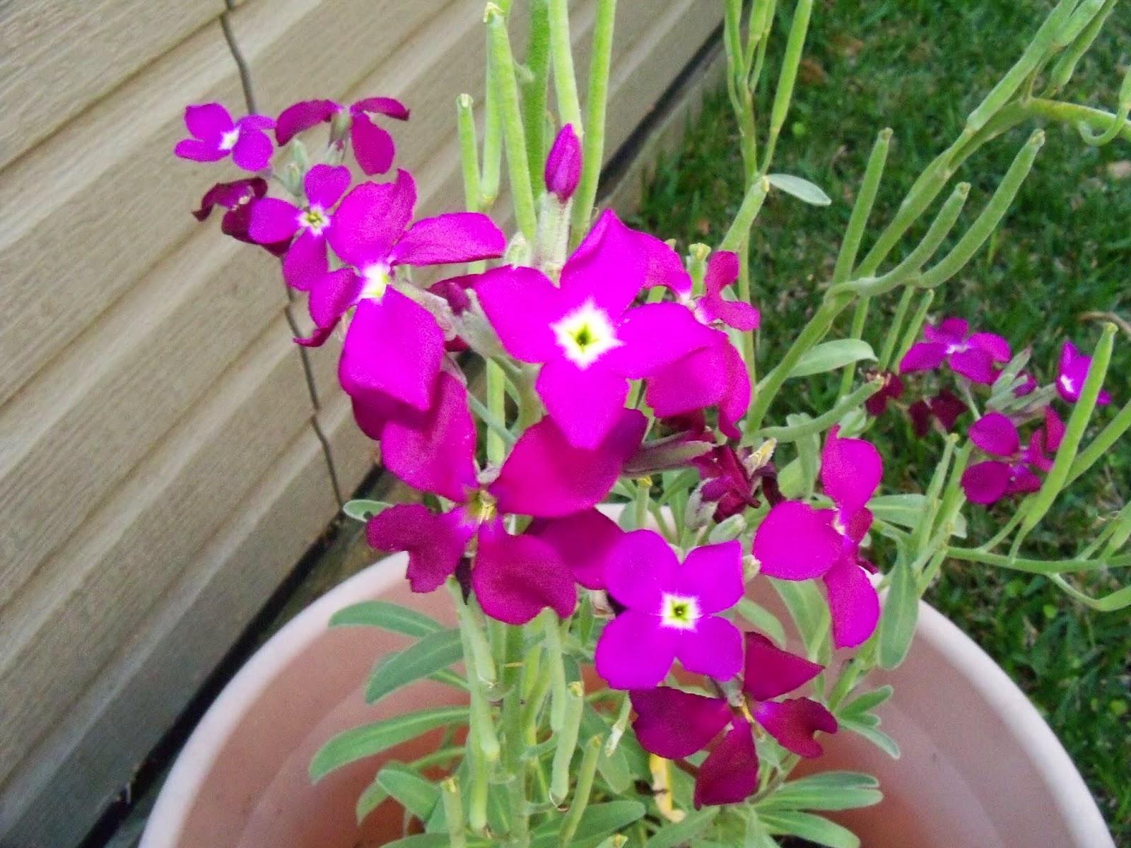 Gardening 2015 - 116_7697.JPG