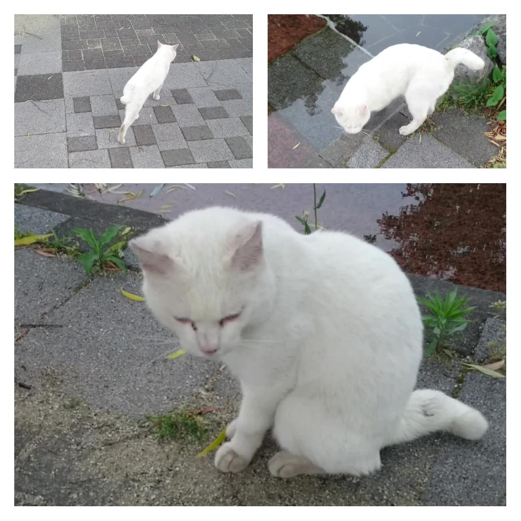 白猫との再会