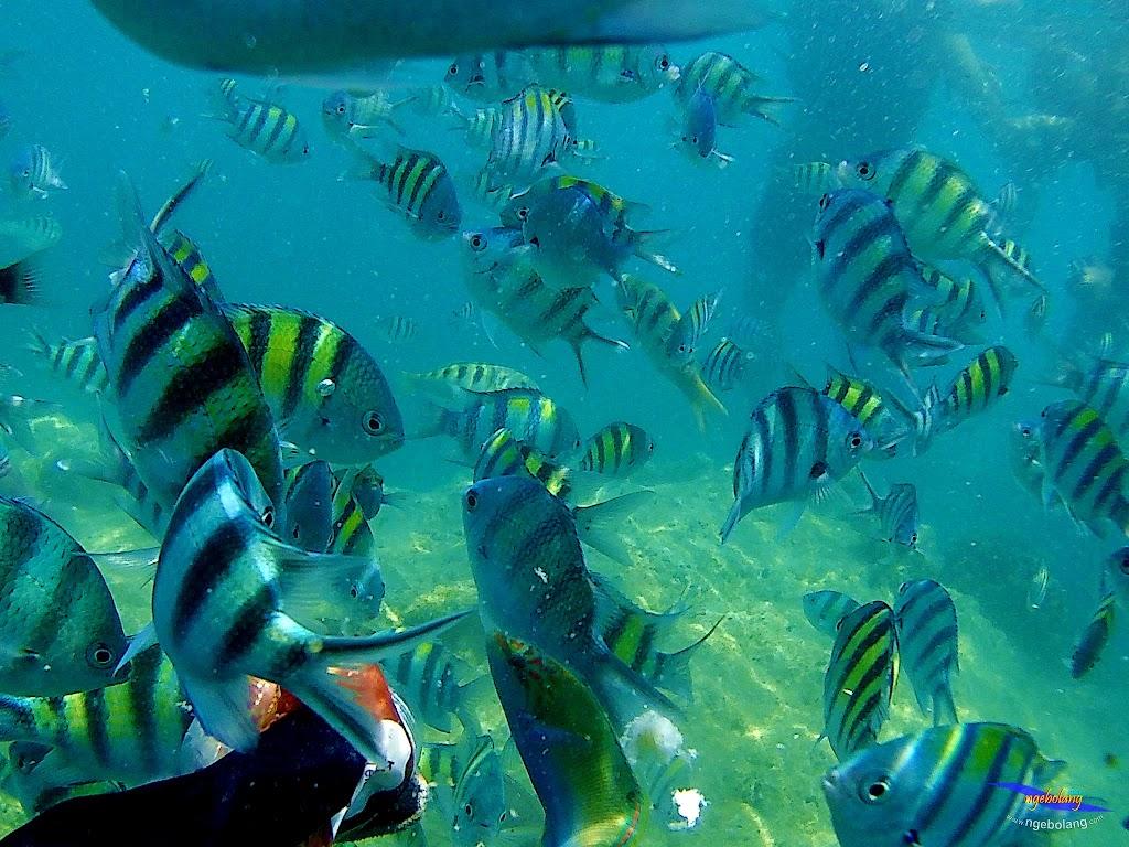 pulau harapan, 5-6 september 2015 skc 009