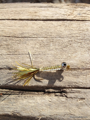Segmented Shad Fly