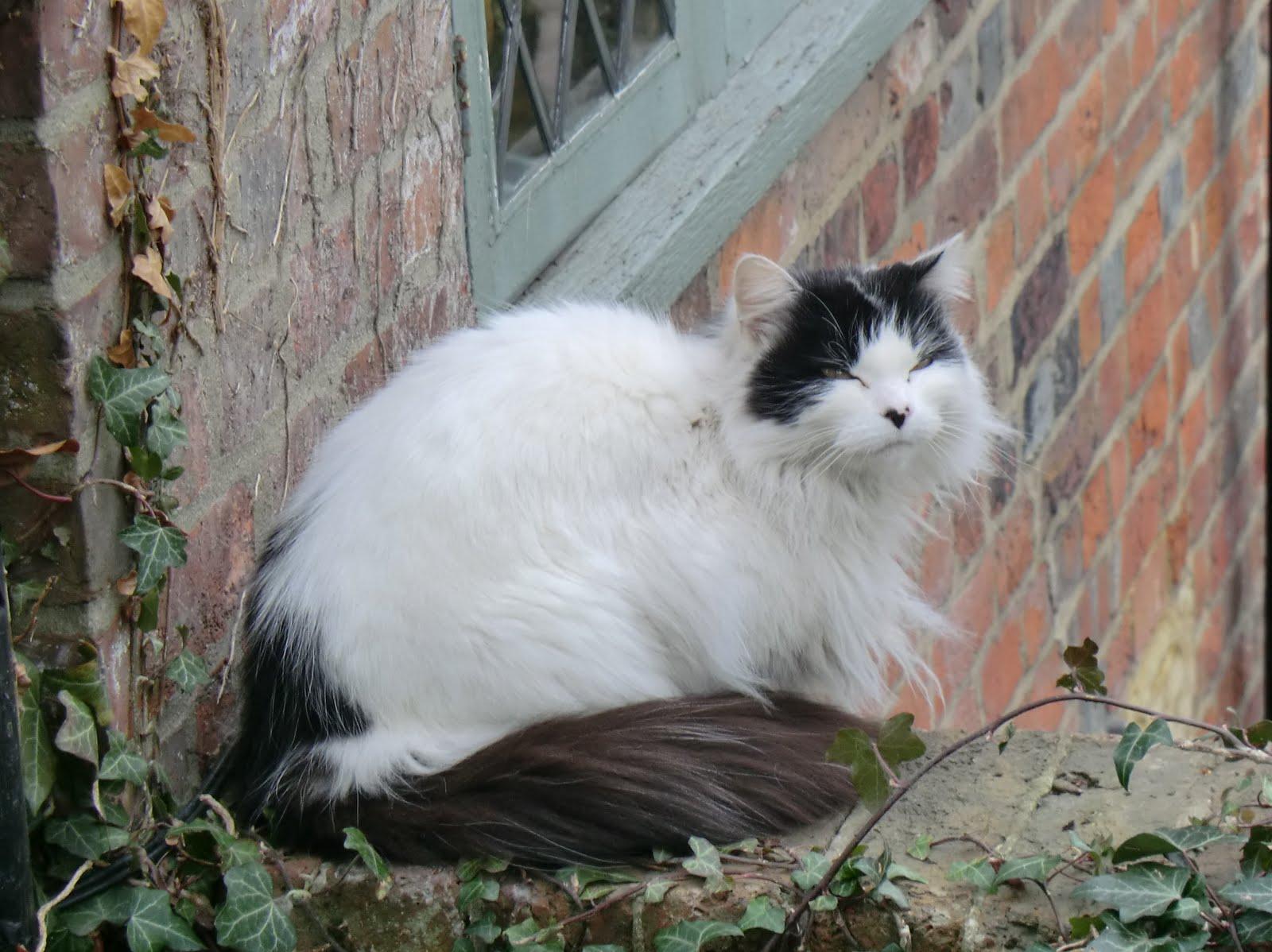 CIMG2478 Contented cat at Groombridge