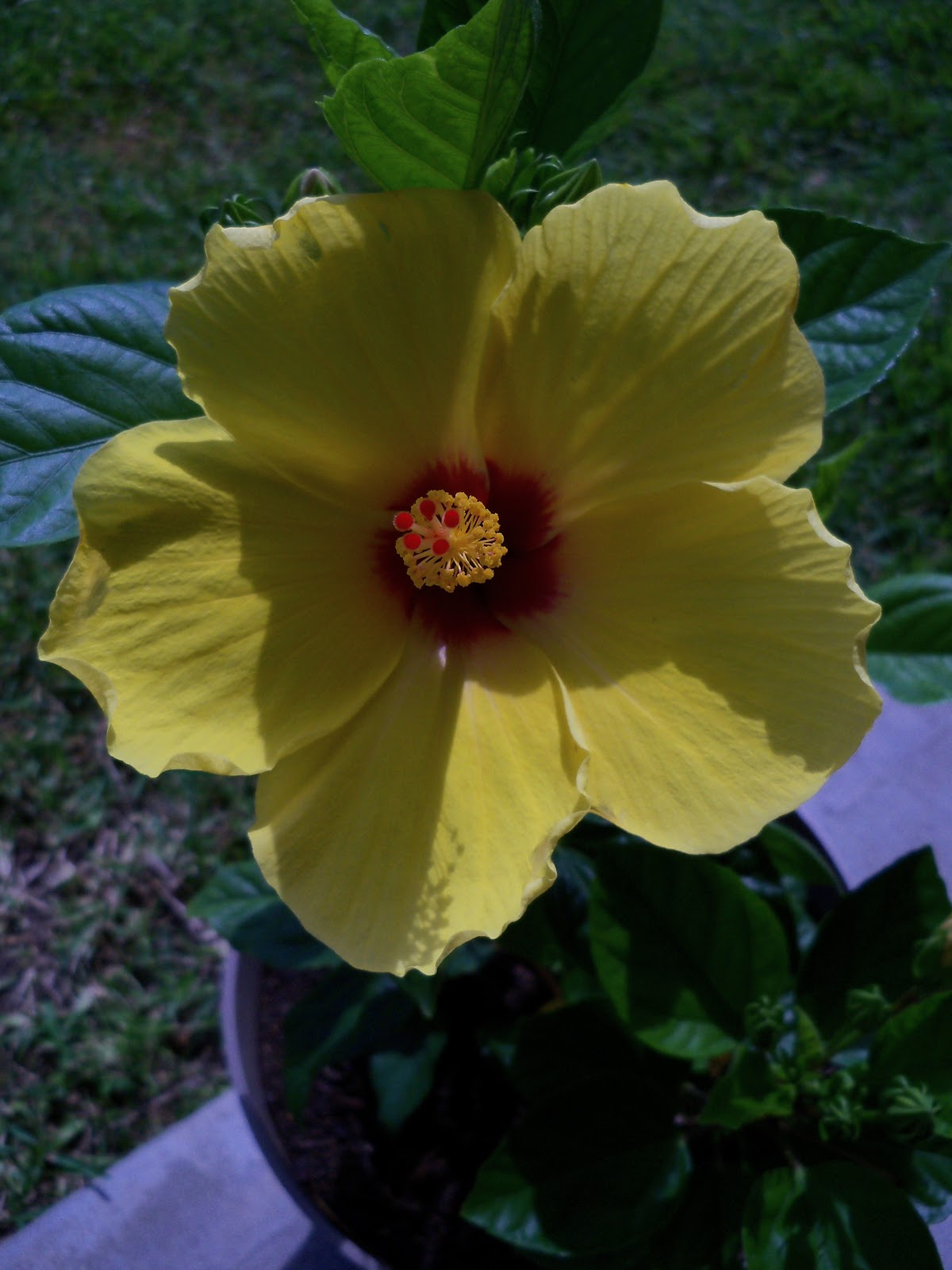 Gardening 2010, Part Three - 101_3886.JPG