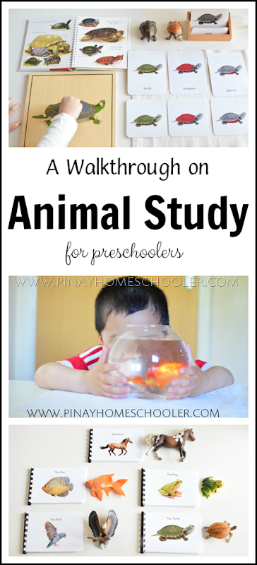 Montessori Inspired Animal Study for Preschoolers