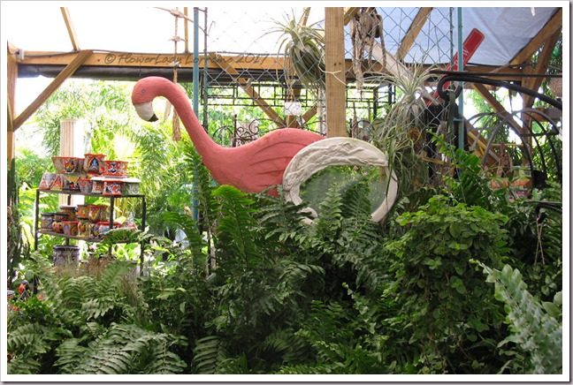 05-08-ferns-flamingo