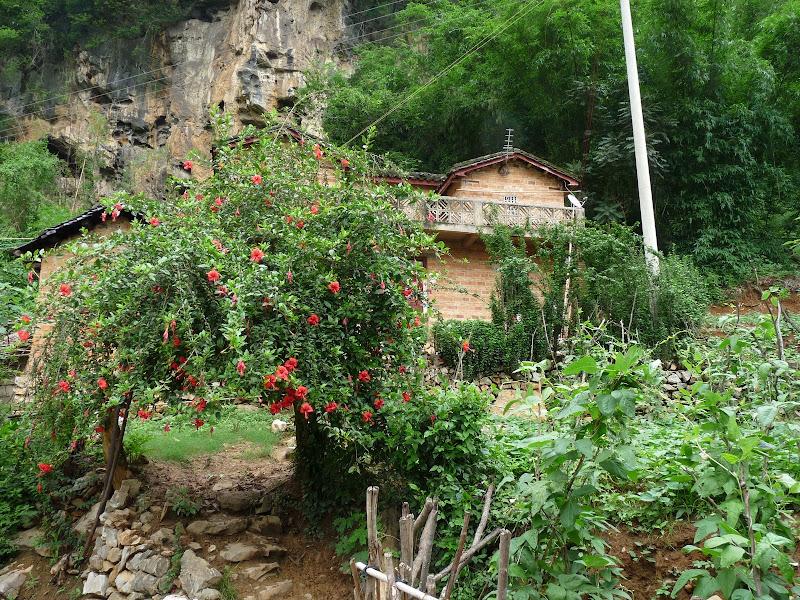 Chine . Yunnan BA MEI 2 - P1260980.JPG