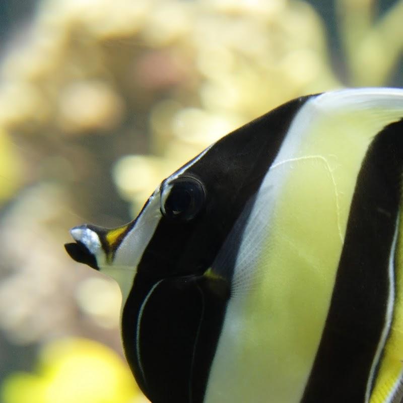 Aquarium_28.jpg