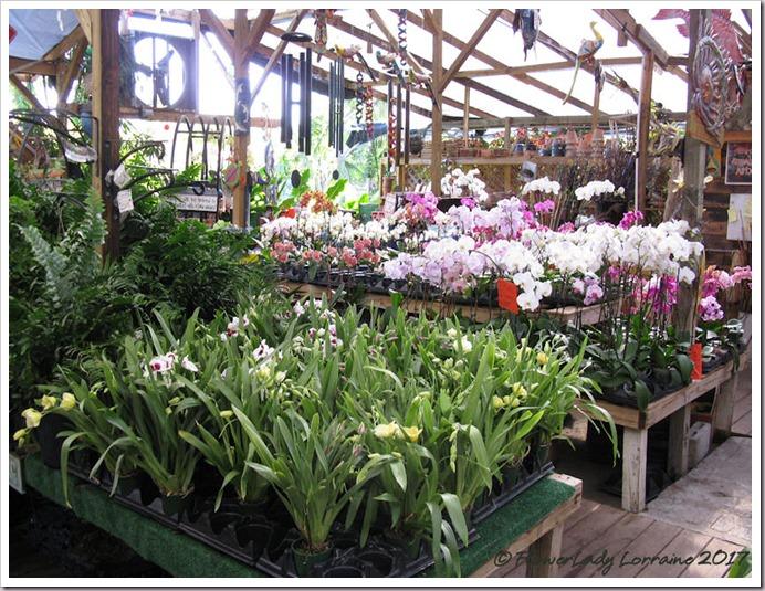 05-08-orchids