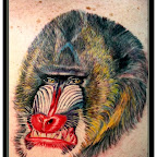 Baboon - Monkey Tattoos Pictures