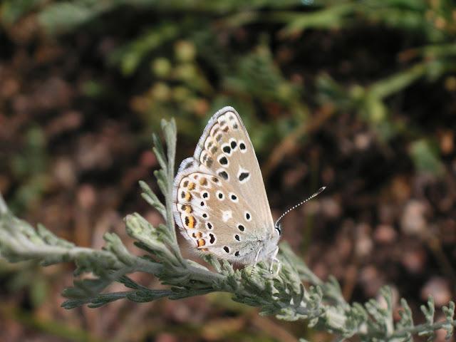 Alpherakya sarta takoi CHURKIN, 2006 (1900 m). Kekemeren, 1er juillet 2006. Photo : J. Michel