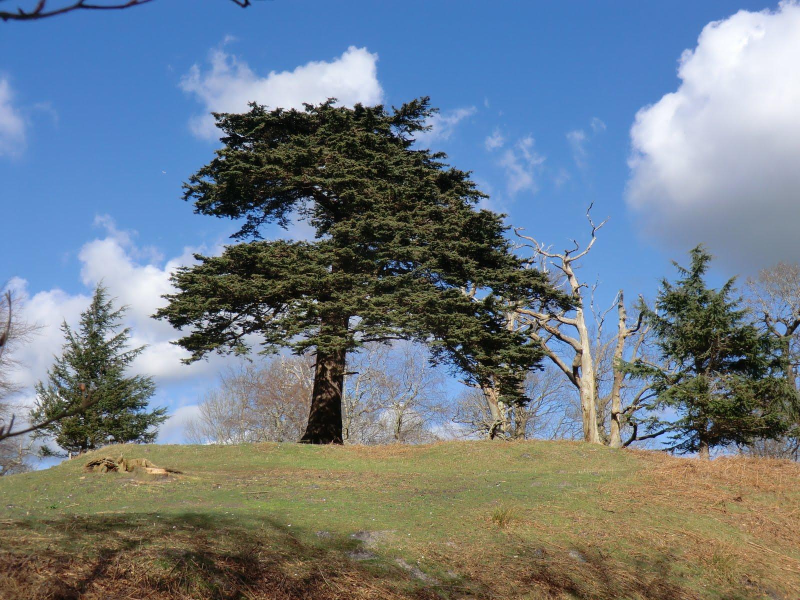 CIMG9971 Parham Park