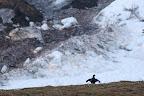 SOMBRE DÉCOR  D'avalanches au lever du jour. Quelle ambiance !