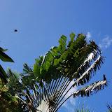 06-17-13 Travel to Oahu - IMGP6865.JPG