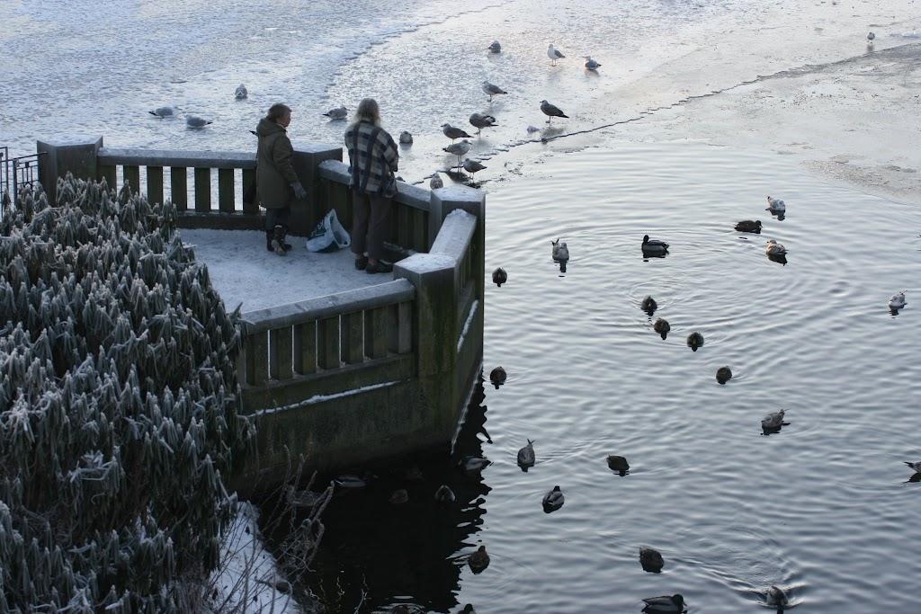 Auch die Enten fühlen sich wohl