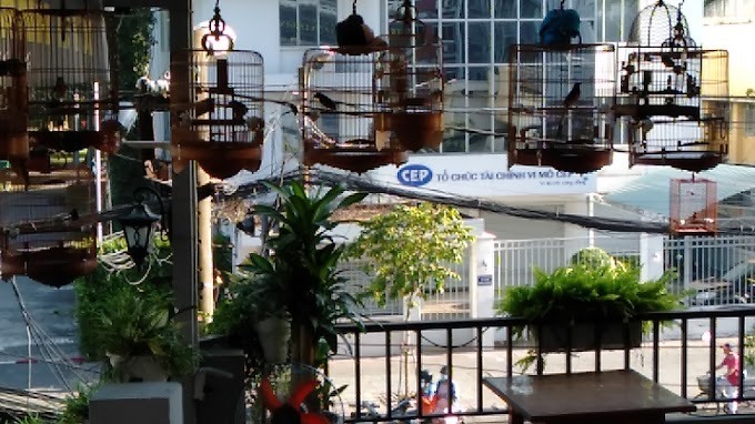 Sài Gòn cà phê nghe chim hót