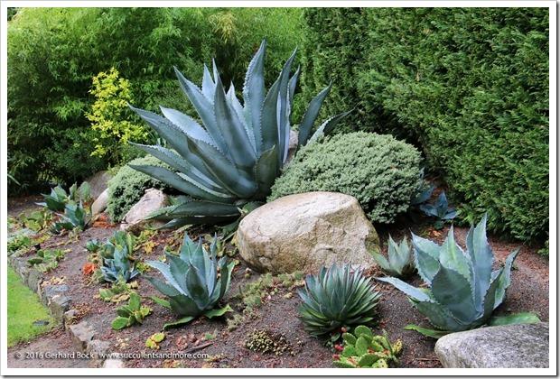 160906_Butchart_Gardens_0009