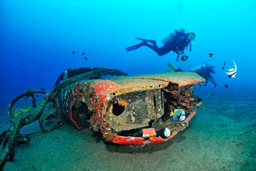 Cars Found Underwater : The marine animals have comfortably furnished in a ford