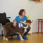 Asistenční psi  2014 003.jpg