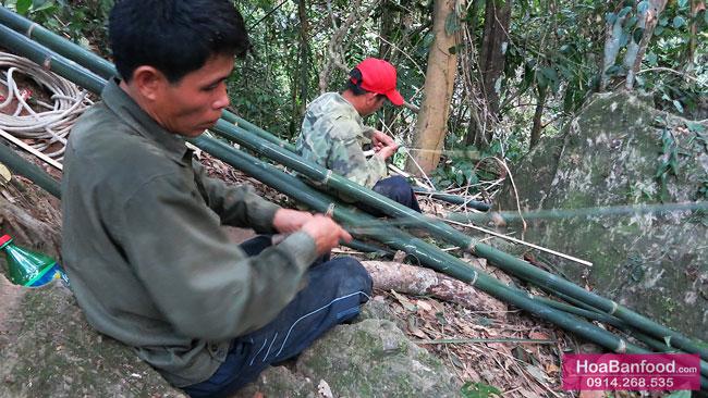 Khai thác Mật Ong Rừng ở Lai Châu - 17