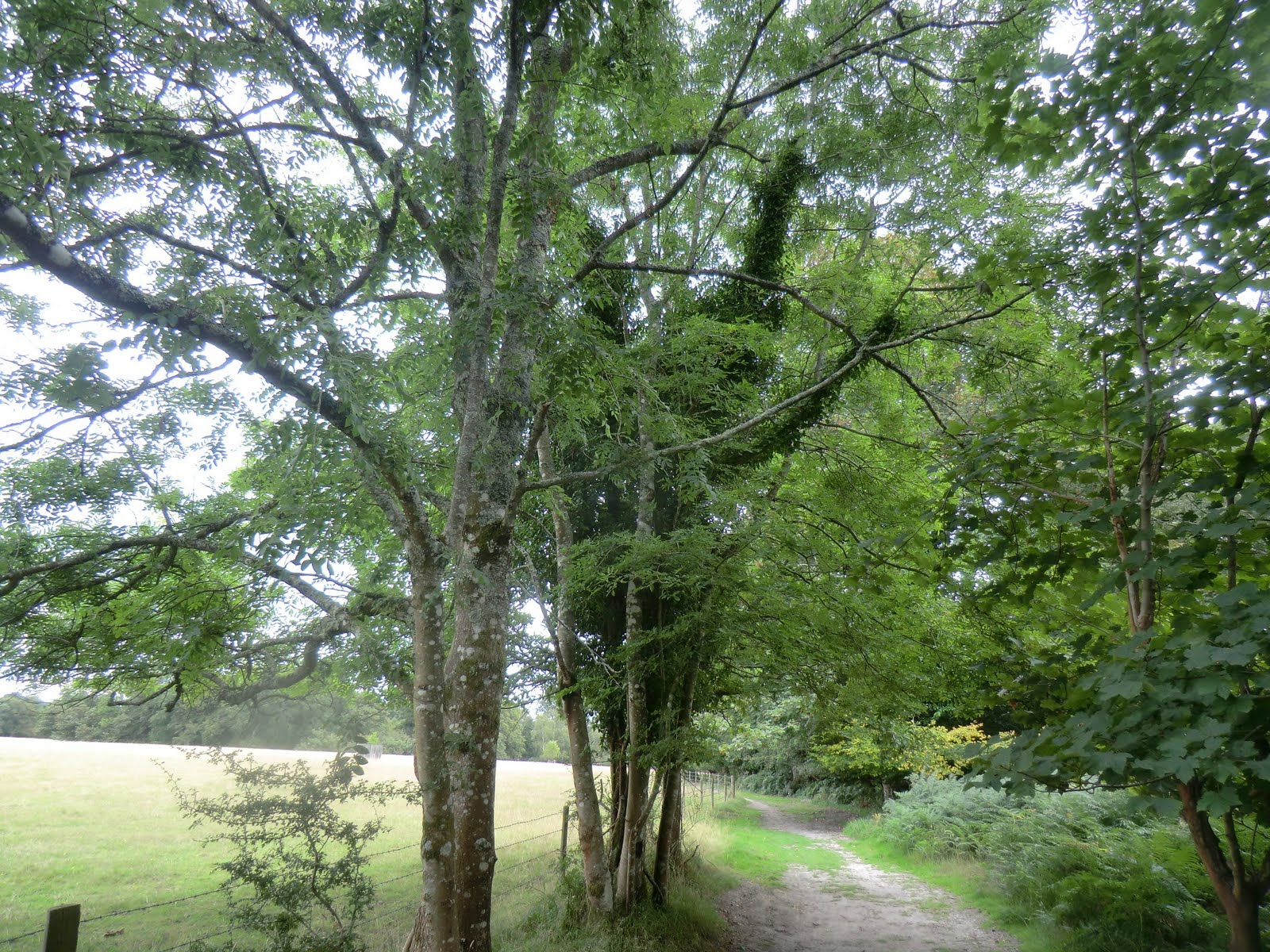 CIMG4274 Roydon Woods