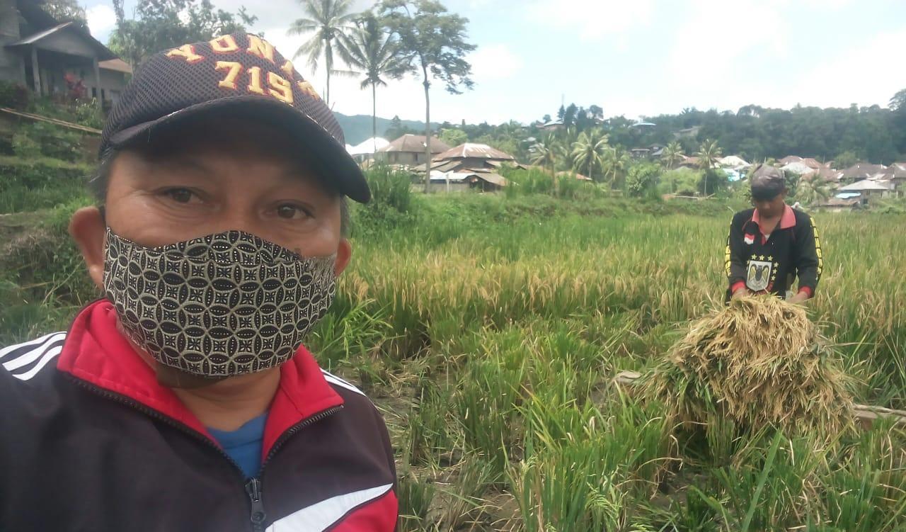 Siap Jaga Pangan, Poktan Agrosubur Panen Padi Bersama Penyuluh