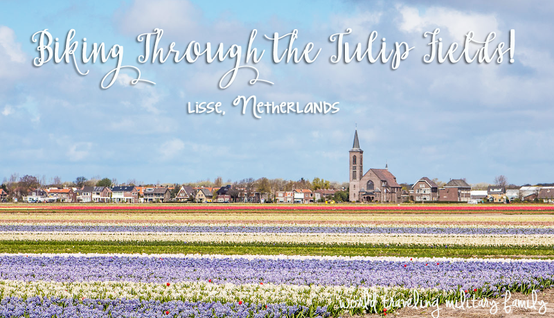 Biking through the tulip fields Lisse, netherlands