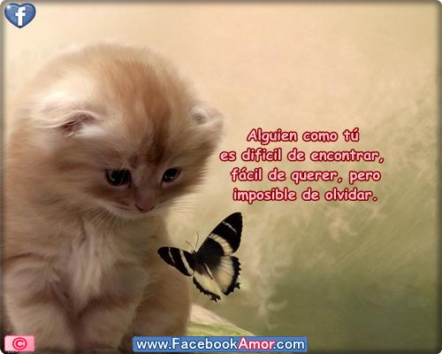 Imagenes Con Frases De Amor Para Facebook: Imagenes Con Frases De Amistad Para Facebook