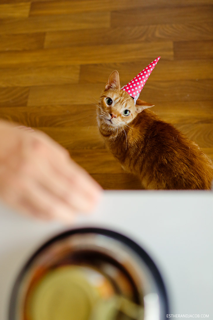 Happy Birthday Cats | Cat in a Birthday Hat.