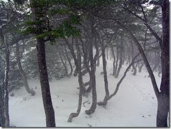 Ushuaia_nevasca-glaciar-martial