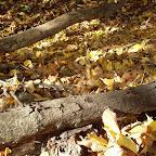 Уборка мусора на Лысой горе 028.jpg