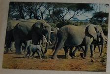 593 11-carte postale