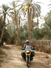 Photo: In amongst the date palms in Southern Tunisia