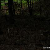 2013-06-18 - DSC_0413.JPG