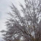 12-06-13 DFW Ice Storm - IMGP0441.JPG