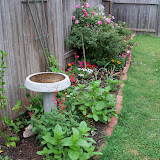 Gardening 2011 - 100_7443.JPG