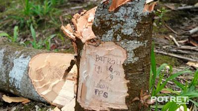 Terjadi Perusakan Hutan di Lumajang, Diduga Karena Lalai Dalam Pengamanan