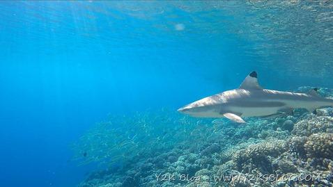 Gli squali pinna nera nelle acque della pass di Sud-Est - Fakarava