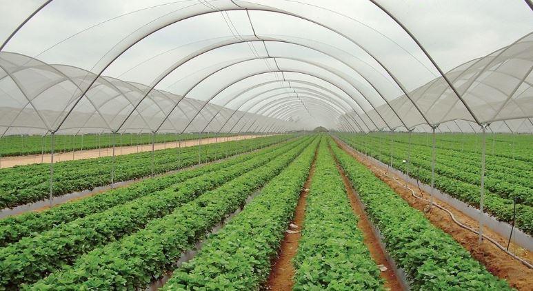 राष्ट्रिय कृषि गणना २०७८ को तयारी सुरु